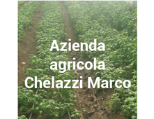 produttore Azienda Agricola Chelazzi Marco